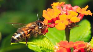 Reaching for Nectar