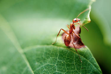 Crawling on a Leaf by KingFamine