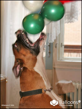 Mad about balloons