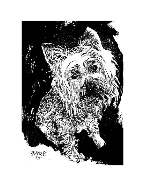 Silky Terrier by B3NN3TT
