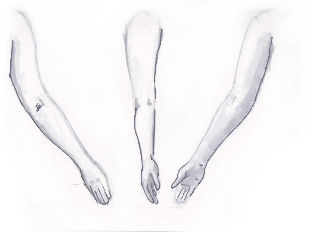 female arm study by calithlin on deviantart