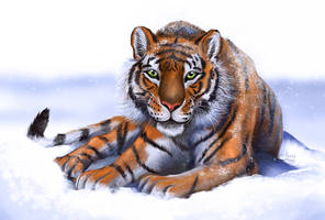 Snowy tiger by FuzzyMaro