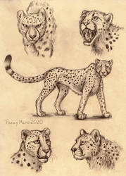 Sketch page- Cheetah