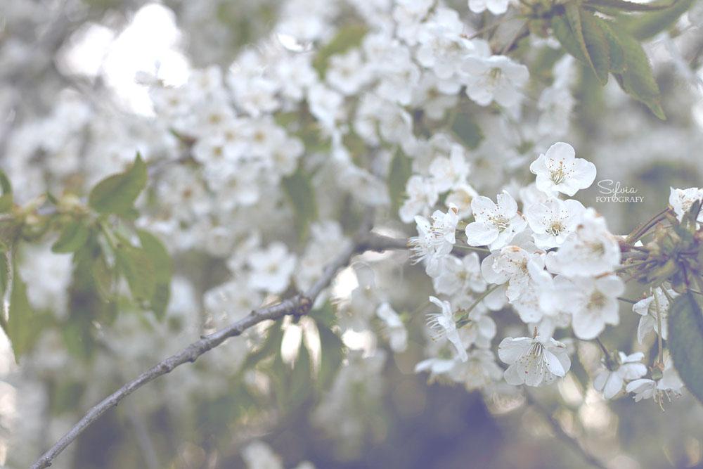Blommor by SylviaDalberg