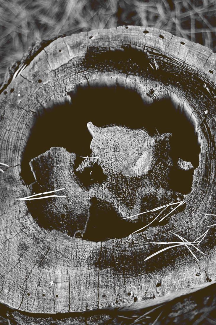 Wood stock by SylviaDalberg