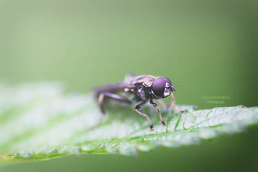 Bug by SylviaDalberg