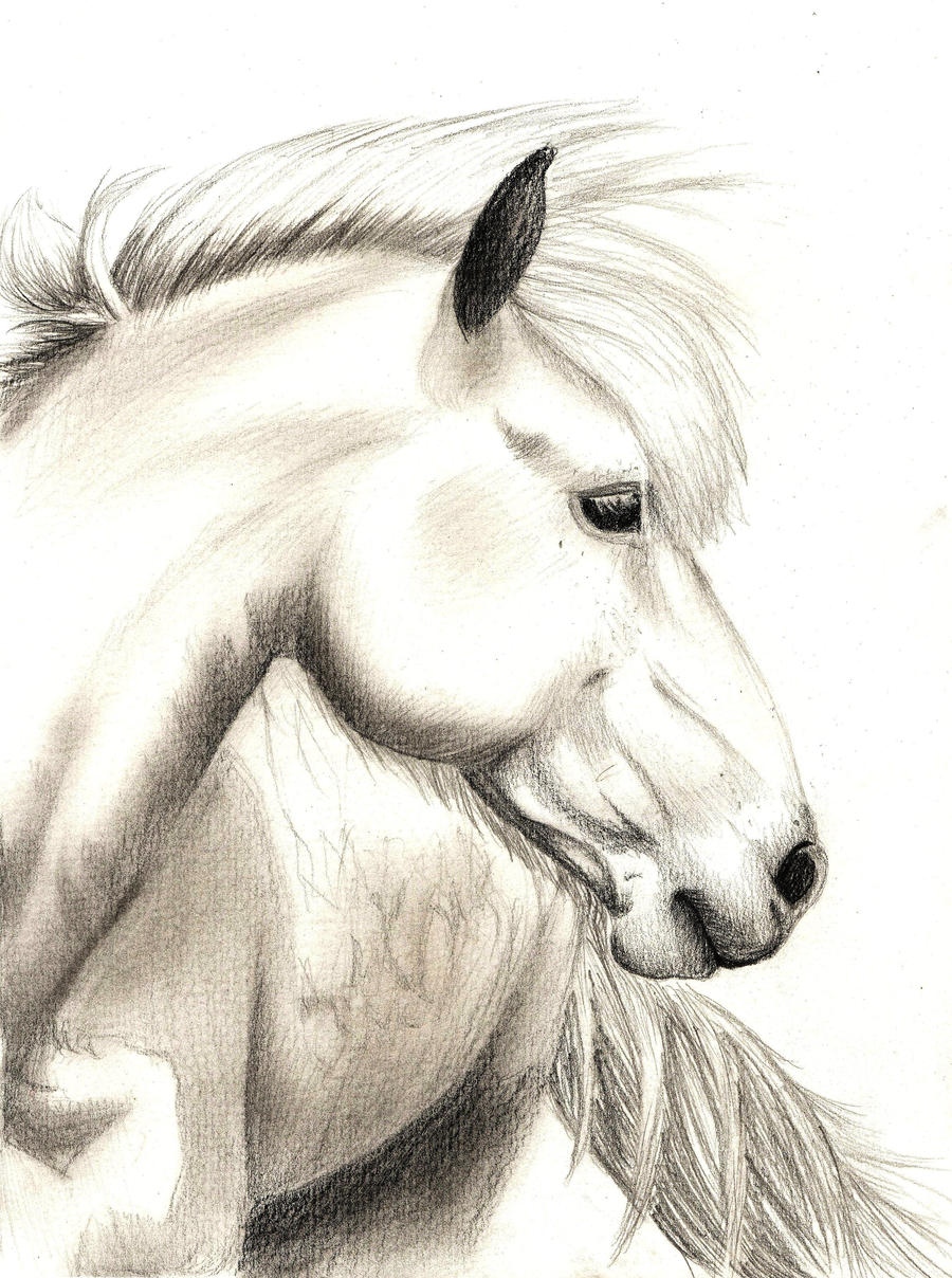 Realistic Horse Sketch by jennypip