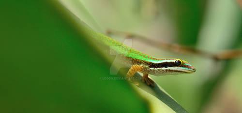 Le gecko vert de Manapany by LeoGg