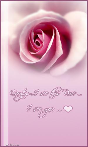 Rose by 3ameeduae
