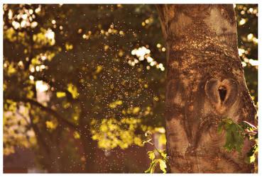 We'll meet beside the Loveheart Tree