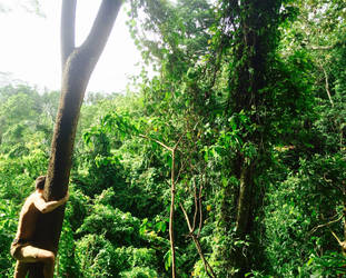 Monkey in monkey forest @ Ubud, Bali by victorgugo86