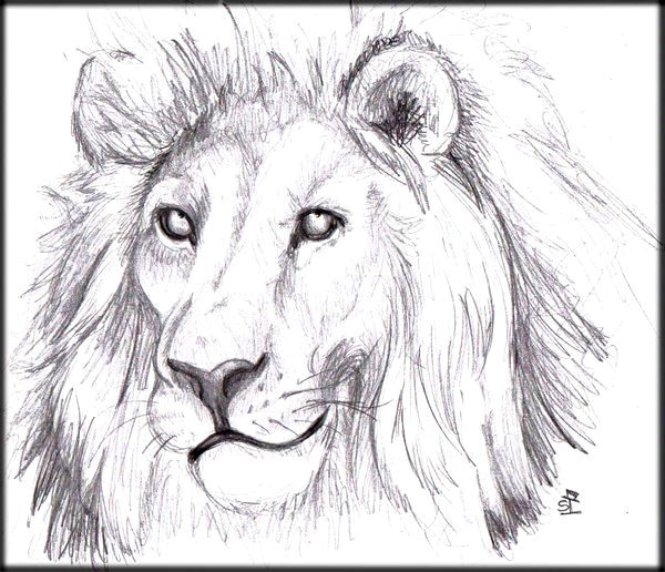 Lions face drawing - photo#6