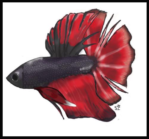 Colonel shofer 39 s mild ocd model blog 06 sep 2011 for Japanese fighter fish