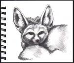 Fennec fox, sketchbook
