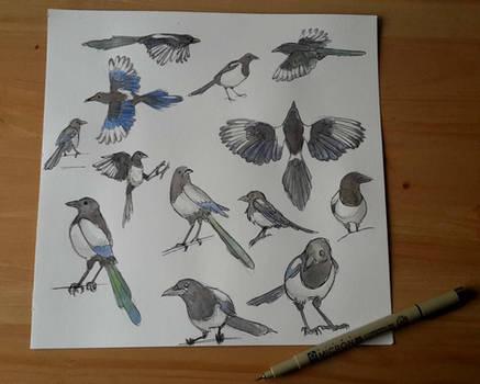 Dem birds 1