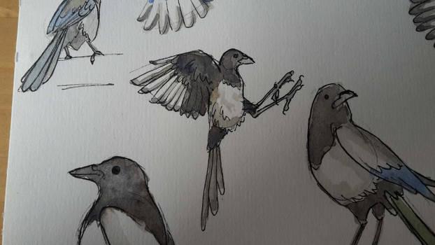 Dem birds 3