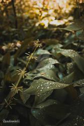 Morning Droplets