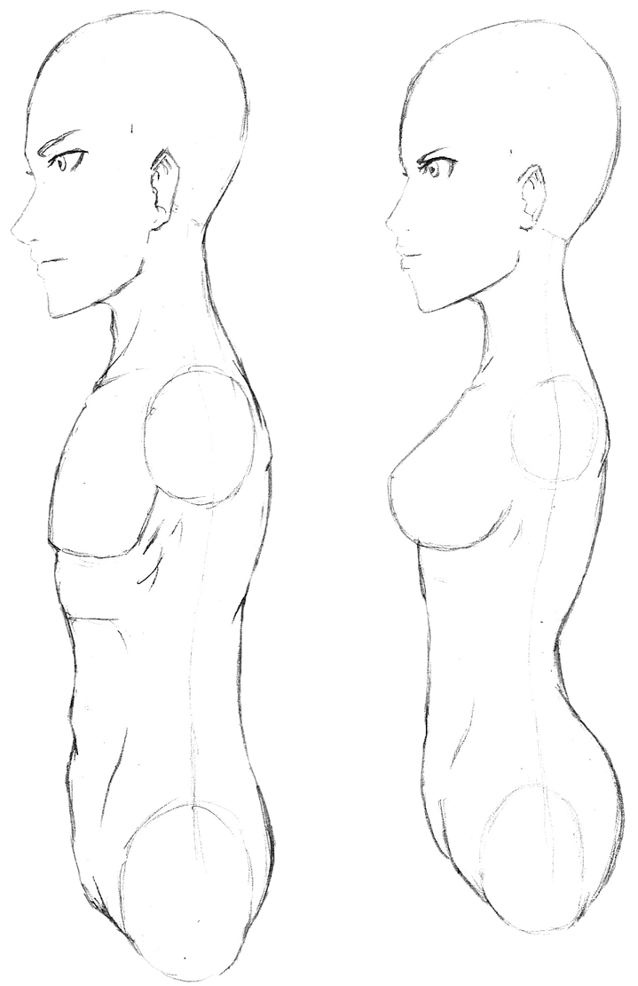 Anime male female bust profile average weight by skeletonny