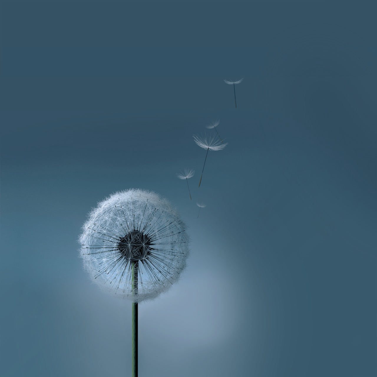 dandelion cell phone wallpaper quotes - photo #21