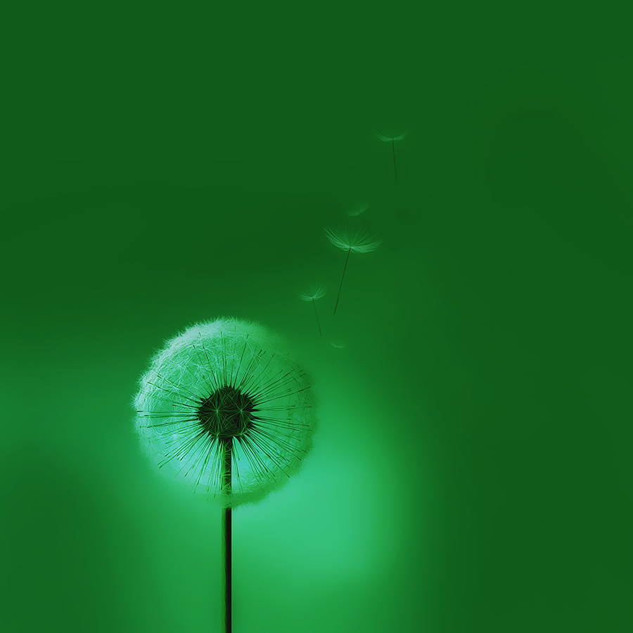 Samsung Galaxy S3 Green Dandelion Wallpaper SIII By Kingwicked