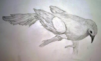 Magpie pencil by foxtrinee