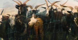 Baroque Goats