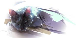 he Cat