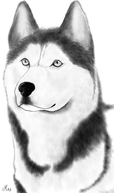 Draw A Husky Face Drawn Face Husky 3318930 Playful And Smart