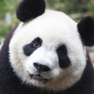 Pandapragi's Profile Picture