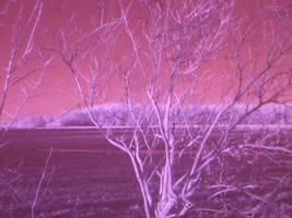 Strange Branches. IR Test 13 by lumination