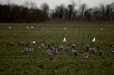 Birds on field by lumination