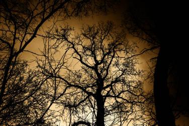 Tree by lumination
