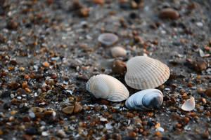 Shells at beach by lumination