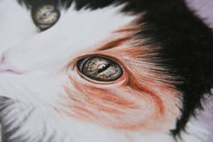 Cat's eye by alexiawinter