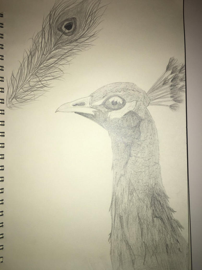 Peacock (favourite bird) by Goodest-Boy