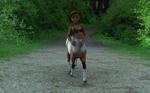 Girl4 Centaur