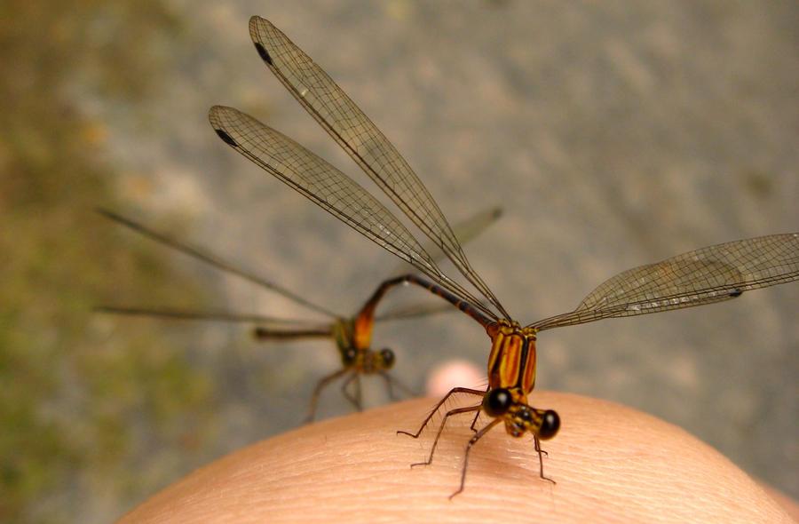 eu amo insetos II by princesstochtli