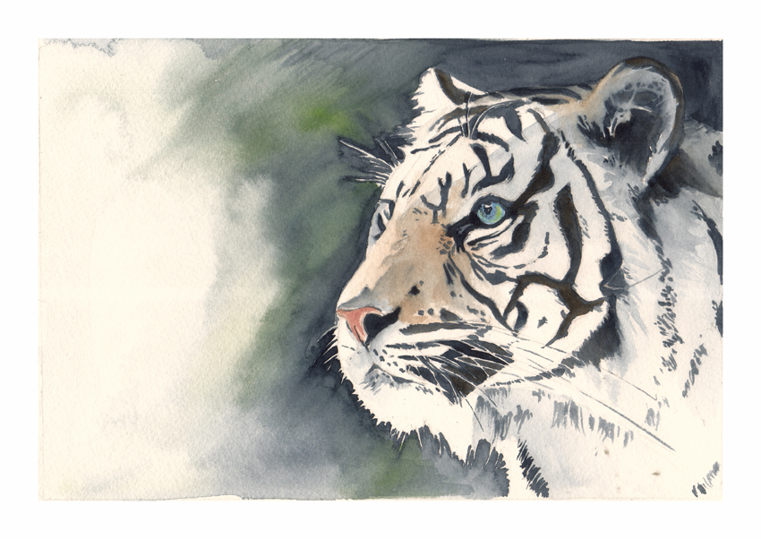 white tiger portrait by emmawood