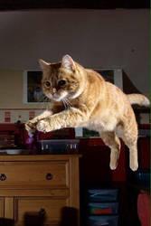 Flying feline? by Archiemonty