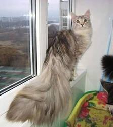 Big tail? by Archiemonty