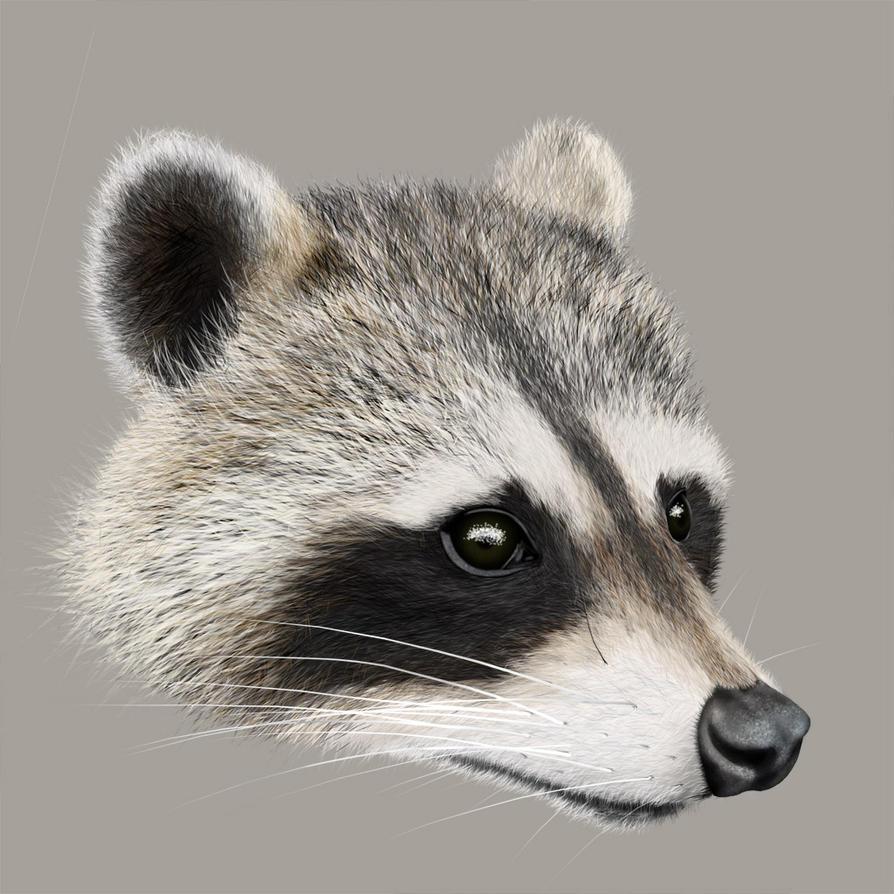 Raccoon by epistemophagus