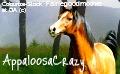 My new howrse avatar... by AppaloosaCrazy