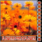 AV-Flowers, 150x150 by Krazy-Purple