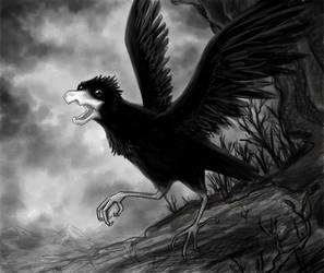 Crow by Shandria