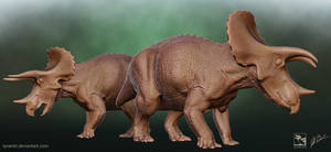 Triceratops Sub-Adult and Adult - Saurian