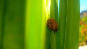 Snail again