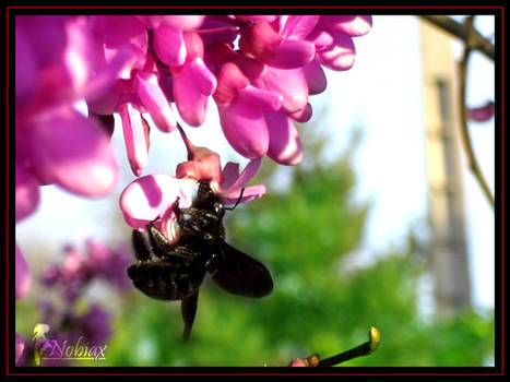 Strange Bumblebee