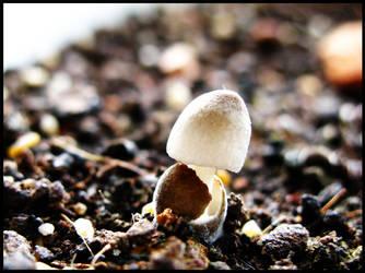 tiny fungi by mimitnt