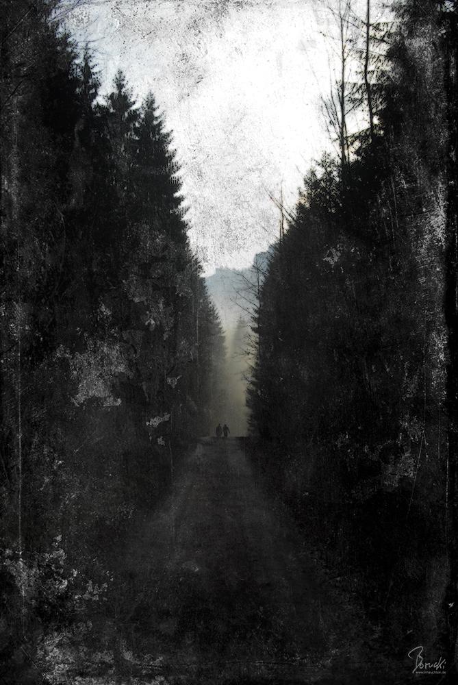 a forest by irrleuchten