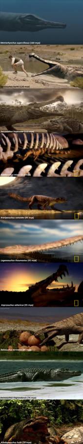 Mesozoic Crocs in Paleo Media